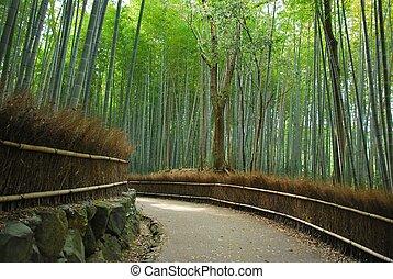jasny, gęsty, gaj, ścieżka, wzdłuż, bambus