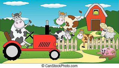jeżdżenie, krowa, traktor