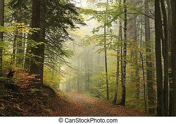 jesień, ścieżka, przez, las