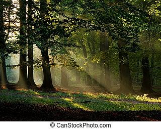 jesień, światło słoneczne, ciepły, mgła, upadek, bukowy, las