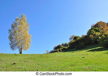jesień, górski krajobraz, las, barwny