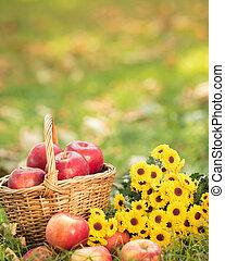 jesień, kosz, jabłka, czerwony