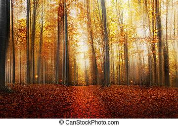 jesień, magia, las, droga