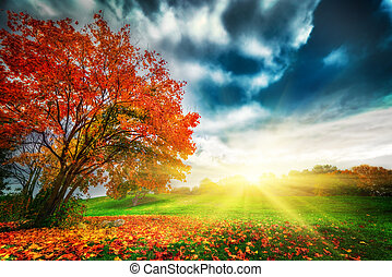 jesień, park, krajobraz, upadek
