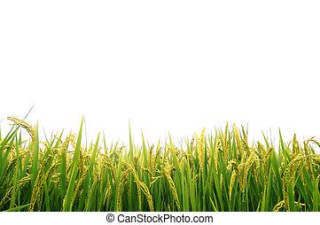 jesień, pole, rozdrażnienie