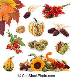 jesień, zbiór