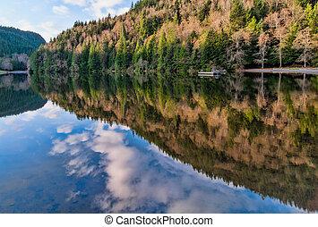 jeziorowy las, alice, odbicie