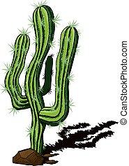 kaktus, samotny