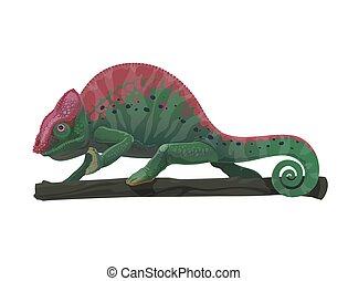 kameleon, gałąź, zwierzę, jaszczurka, rysunek, drzewo