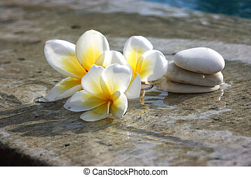 kamienie, zdrój, kwiaty, hotel