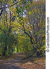 kaprys, park, dreamland:, aleja