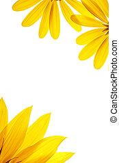 kasownik, słonecznik, biały, details., czysty, ozdobny, strona
