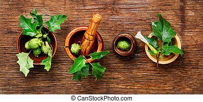 kasownik, zioła, medycyna, datura