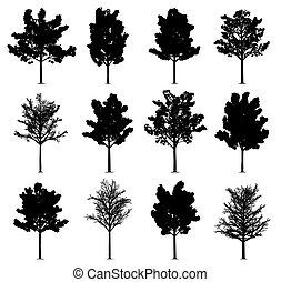 klon, drzewa