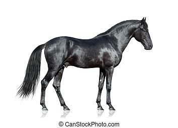 koń, czarnoskóry, biały