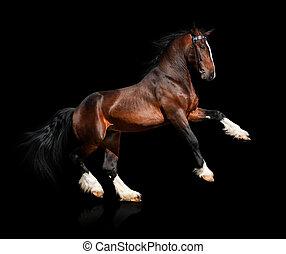 koń, czarnoskóry, odizolowany, zatoka
