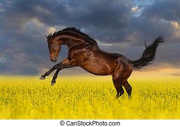 koń, kwiaty