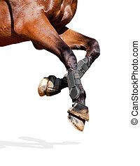 koń, nogi, odizolowany, white.
