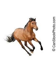 koń, odizolowany