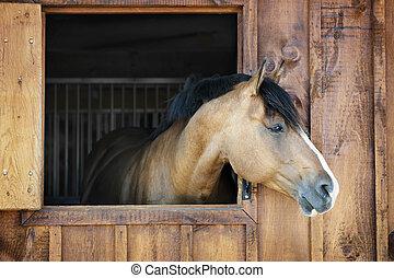 koń, stajnia