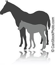koń, wektor, -, źrebię