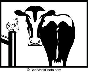 kogut, biały, czarnoskóry, krowa