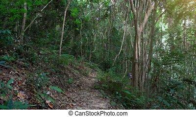 koh, kobieta, młody, wyścigi, dżungla, stosowność, hd., samui., 1920x1080, las