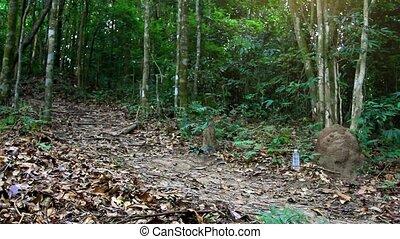 koh samui, kobieta, młody, wyścigi, dżungla, stosowność, las