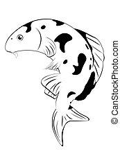 koi, biała ryba, czarnoskóry