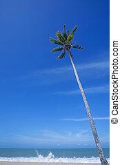 kokosowa dłoń, morze