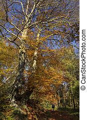 kolor, -, zjednoczony, yorkshire, północ, królestwo, jesień