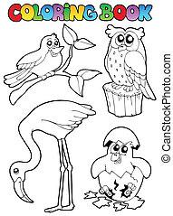 koloryt książka, ptaszki