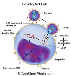 komórka, wejście, t, hiv