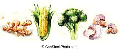komplet, collection., warzywa, gingers, grzyby, akwarela, wektor, brocoli, nagniotek