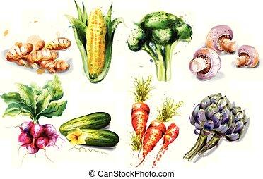 komplet, collection., warzywa, grzyby, karczochy, akwarela, wektor, rzodkiewka, nagniotek