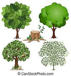 komplet, drzewa