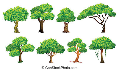 komplet, drzewo