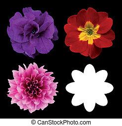 komplet, głowy, odizolowany, wektor, kwiat, black.