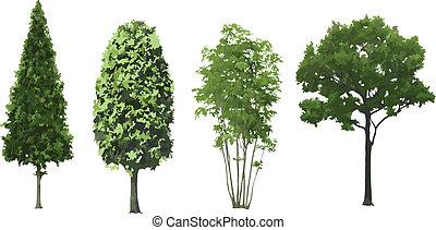 komplet, isolated., wektor, drzewa
