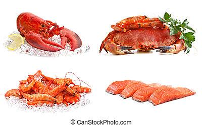 komplet, jadło, tło., morze, salmon., biały, krewetki, homar, krab