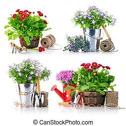 komplet, kwiaty, narzędzia, ogród