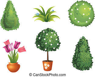 komplet, ogród, rośliny