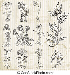 komplet, rocznik wina, -, ręka, wektor, pociągnięty, kwiaty