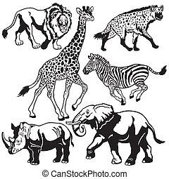 komplet, zwierzęta, afrykanin