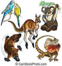 komplet, zwierzęta, australijski