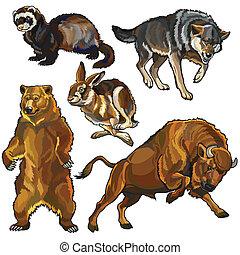 komplet, zwierzęta, europejczyk, dziki