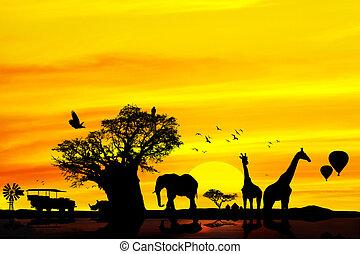 konceptualny, backround., safari, afrykanin