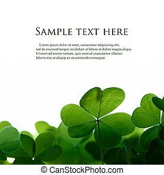 koniczyna, przestrzeń, text., zielony, liście, brzeg