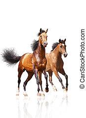konie, biały, dwa