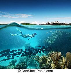 koral, kobieta, młody, snorkeling